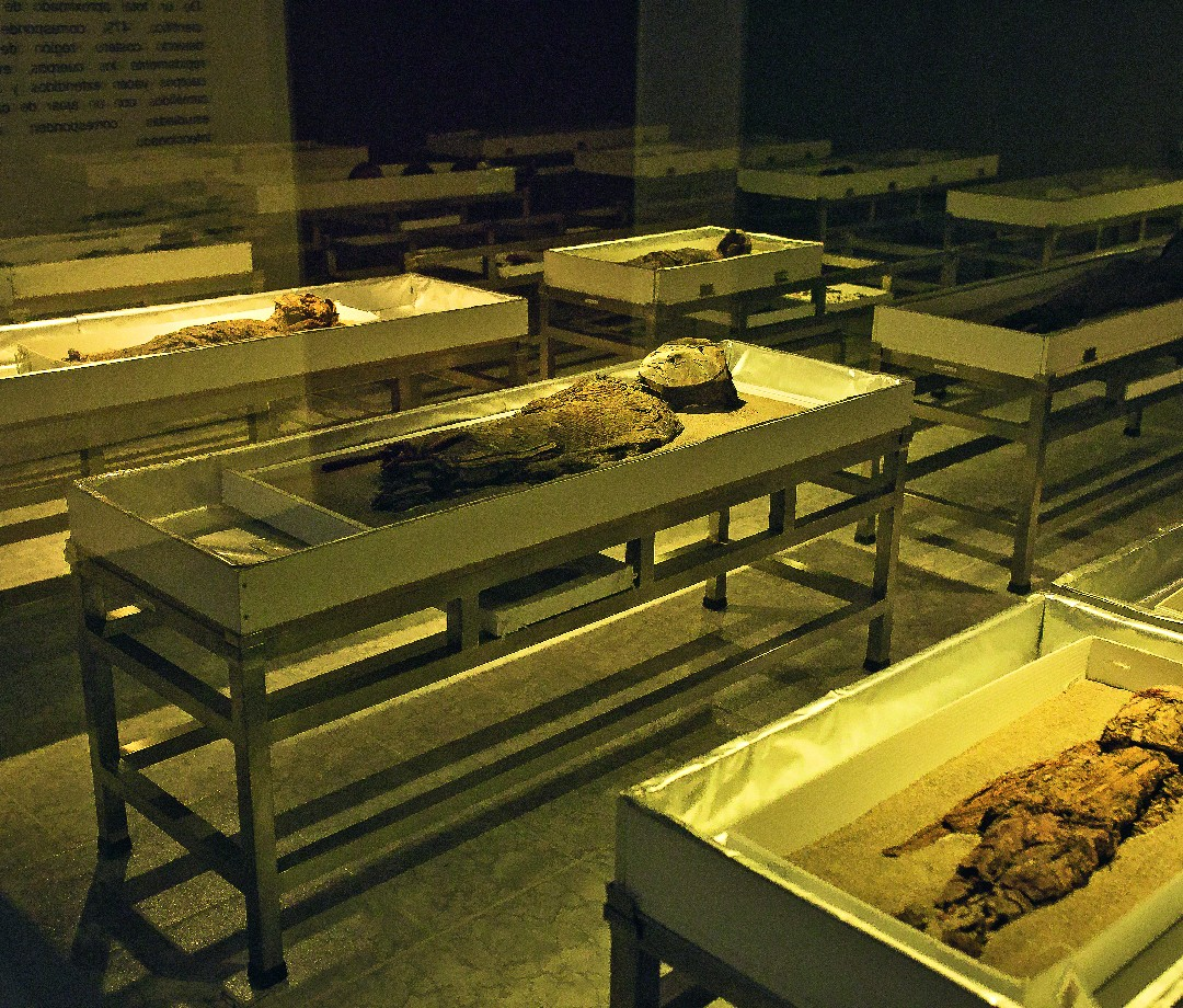 Mummies created by the Chinchorro culture of Chile.