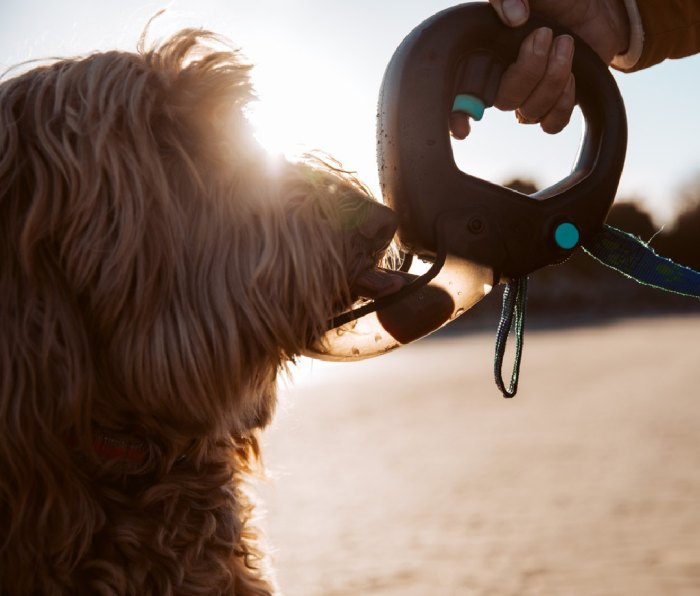 Spleash: Running With Your Dog
