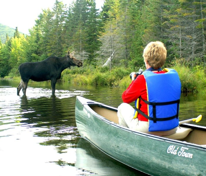 A man in a canoe takes a photo of a very, very close moose.