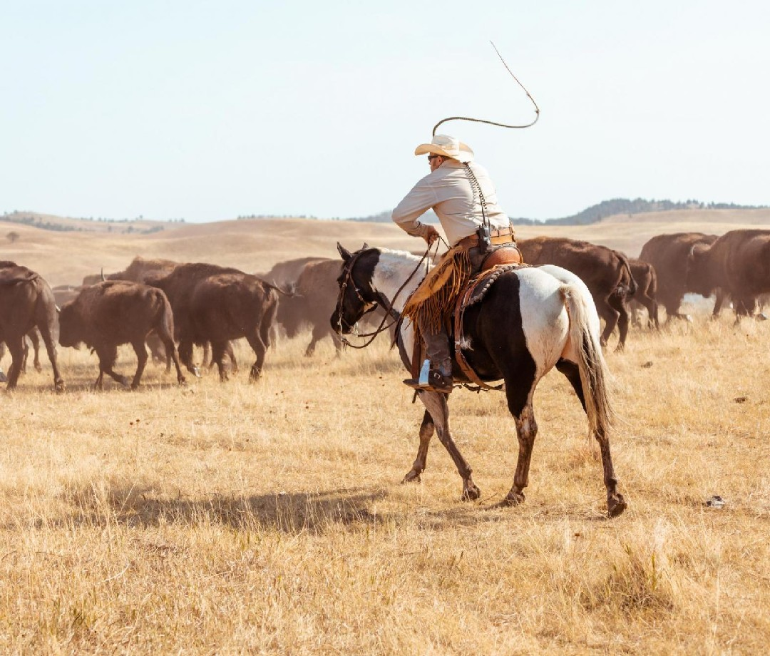 A picture of a cowboy on a horse chasing a herd of buffalo.