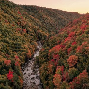 Fall foliage with gorge running through