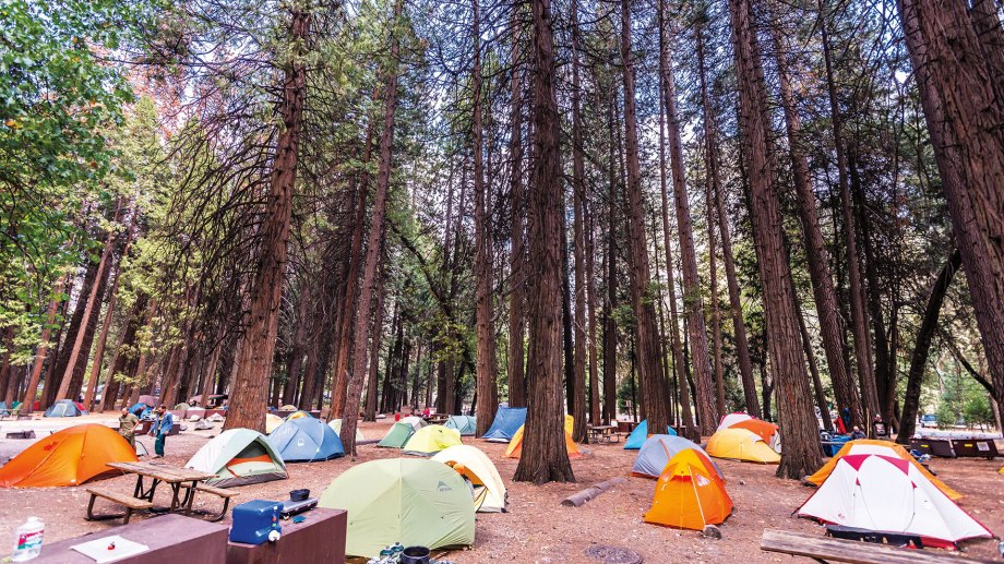 Overcrowded camp site with colorful tents on forest floor