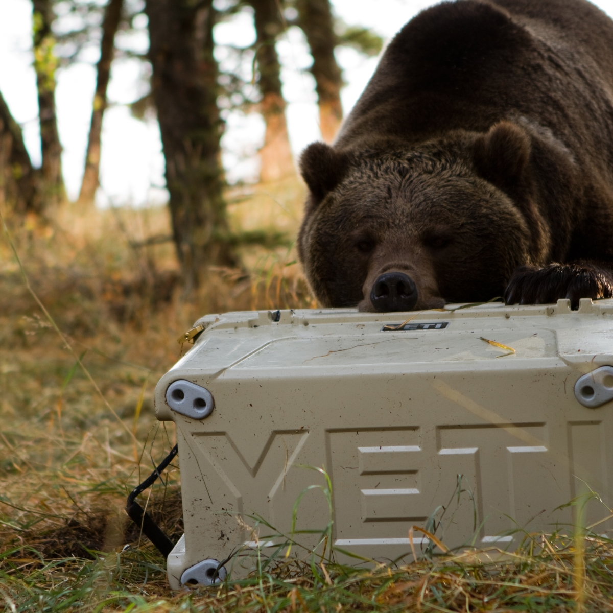 Yeti, the Cooler Company, Was Just Valued at $5 Billion