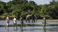 Want to Protect the World's Wildest Places? Go On Safari