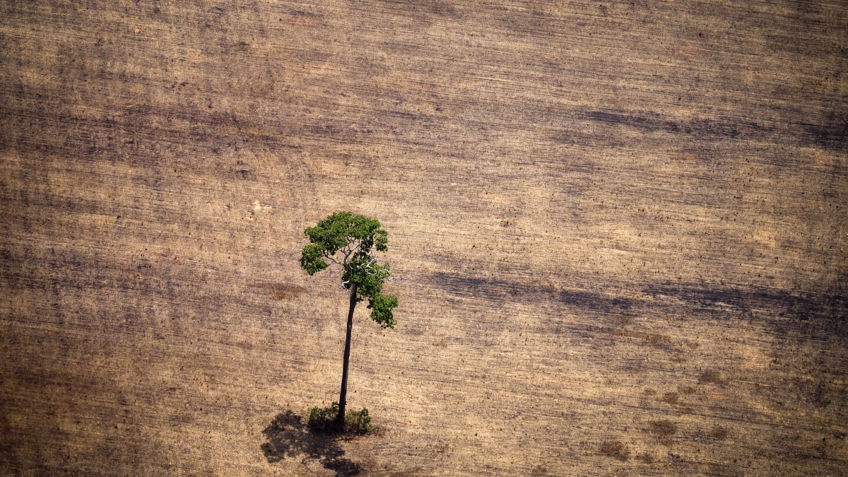 We Lost 10% of the Planet's Wilderness in 20 Years: Here's What You Can Do to Save the Rest