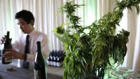 A Little Pot With That Pinot? California Weed Farms and Wineries Pair Up