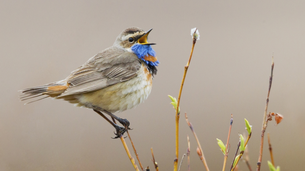 Put Down the Binoculars, This App Can Identify Birds by Song
