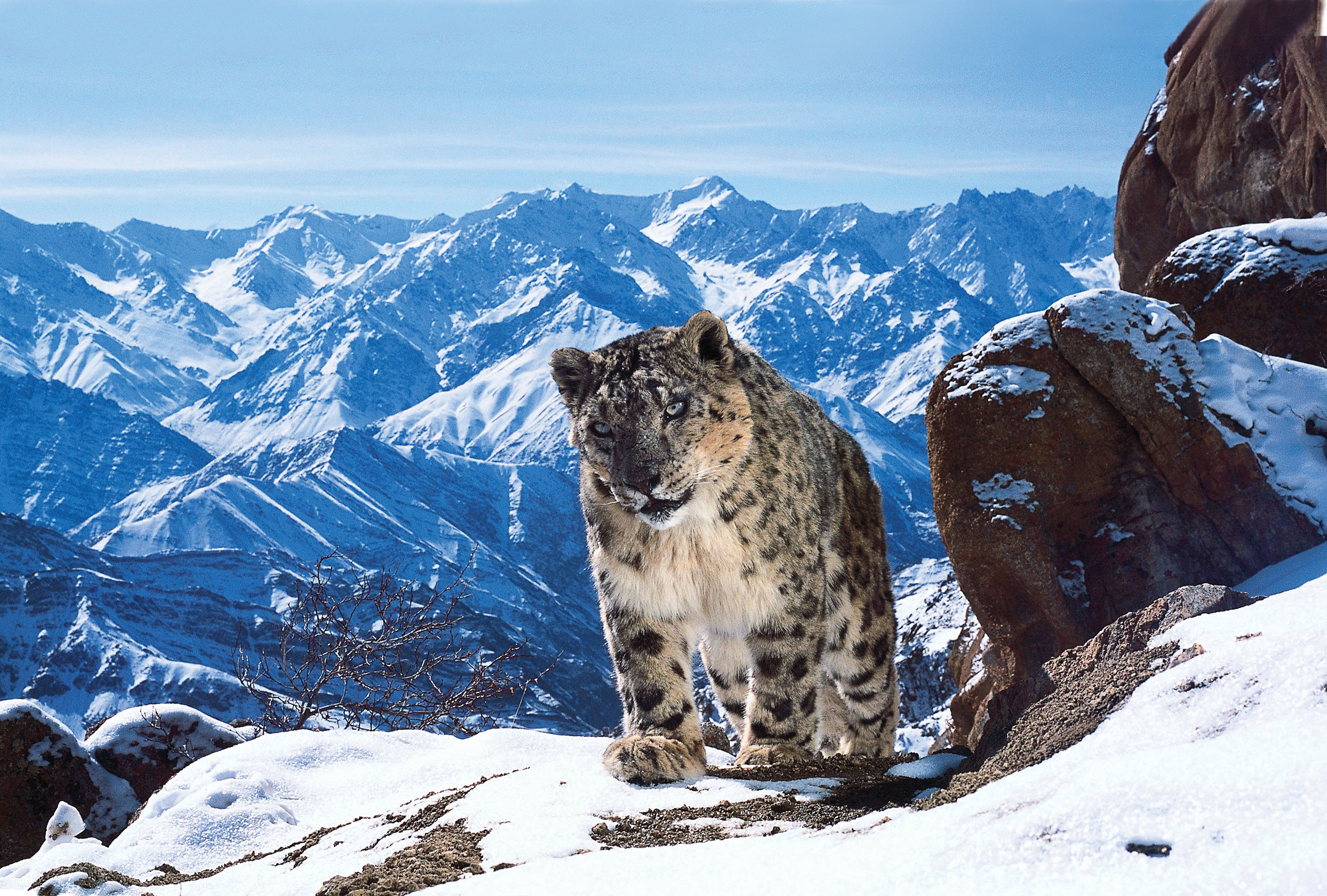 The Making of 'Planet Earth II', the Most Epic Nature Documentary of All-Time