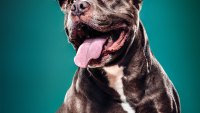 Why Owning a Dog Adds Years to Your Life