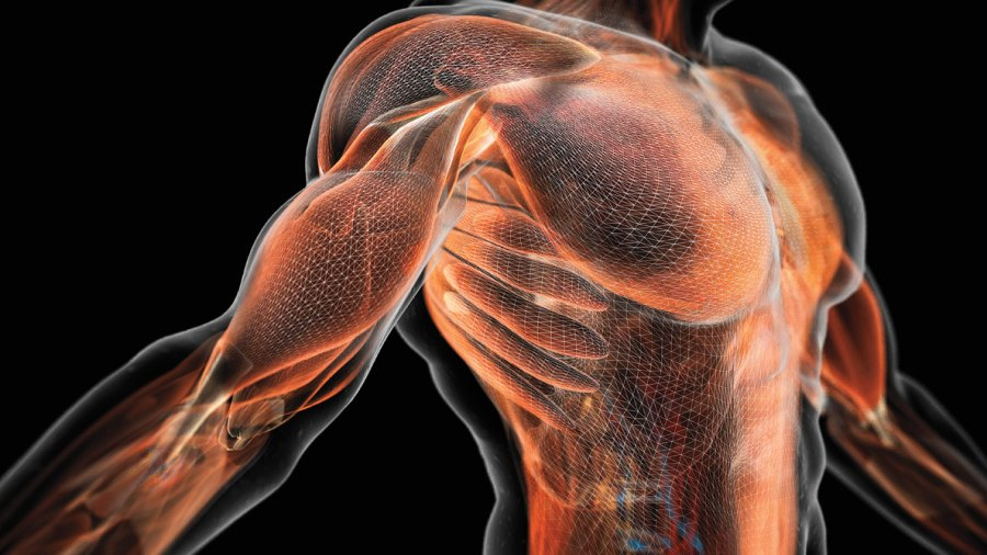 Harness the Power of Your Muscle Matrix