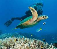 Scuba Dive at the Great Barrier Reef