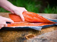 Filleting a Freshly Caught Salmon.