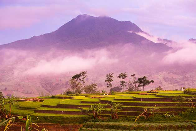 18. Visit Coffee Farms in Indonesia