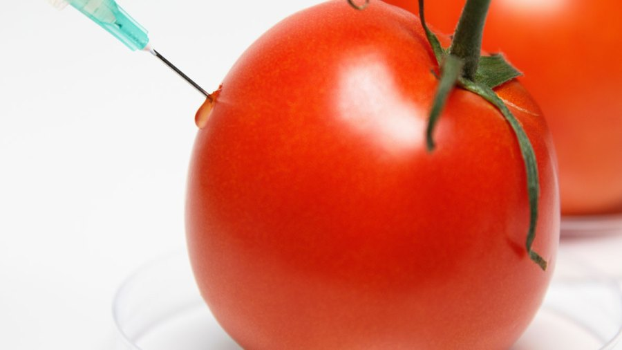 8 Things Every Guy Should Know About GMOs