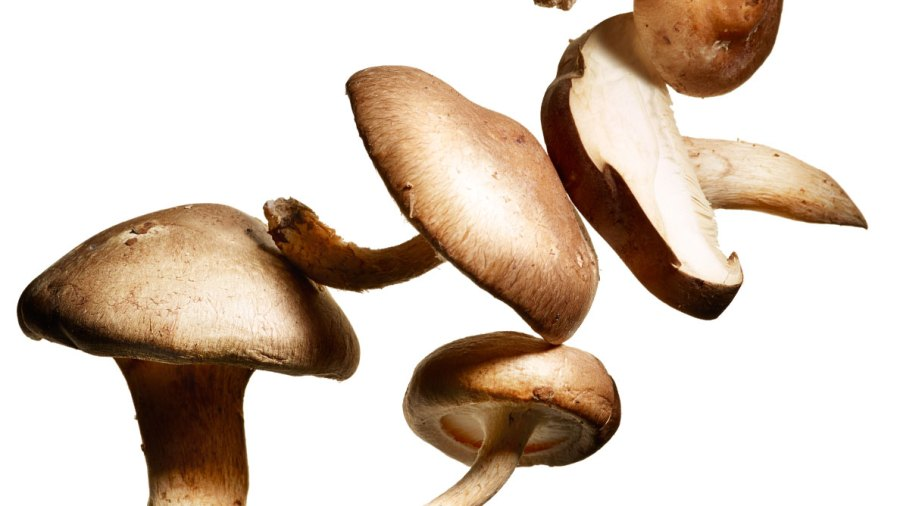 The Powerhouse Mushroom That Boosts Your Immune System