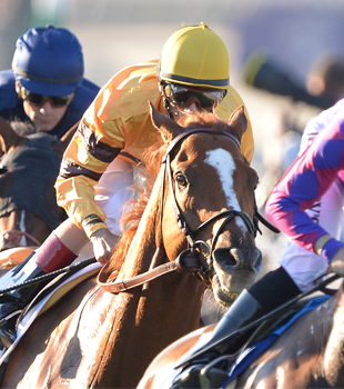 Breeder's Cup: Entering the Winner's Circle
