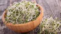 Broil Fat With Broccoli Sprouts