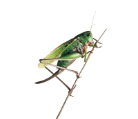 Should I Be Eating Bugs for Protein?