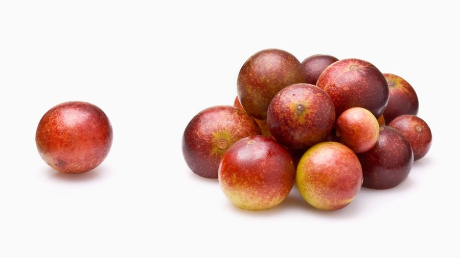 5 Things You Didn't Know About Camu Camu