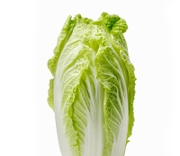 4.Chinese cabbage