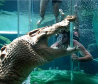 2. Dive with the crocs