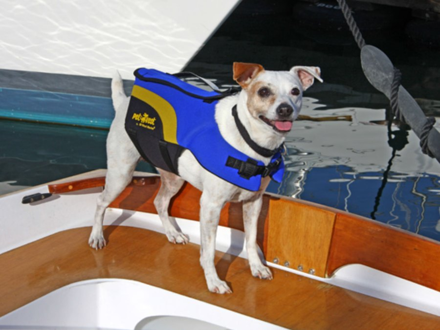 7. How to help your dog swim (if he's not great at it)