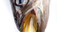 New Study: Can Fish Oil Pills Really Improve Your Memory?