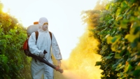 Pesticides: the Dirty Dozen of Fresh Fruits and Vegetables