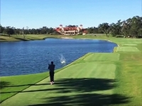 Golfer Kills Duck With Deadly Drive
