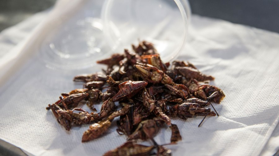 Seattle Mariners grasshoppers recipe