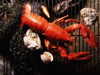 2 Quick. Delicious Ways to Cook Lobster