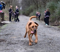 This Dog Can Run 13.1 Faster Than You