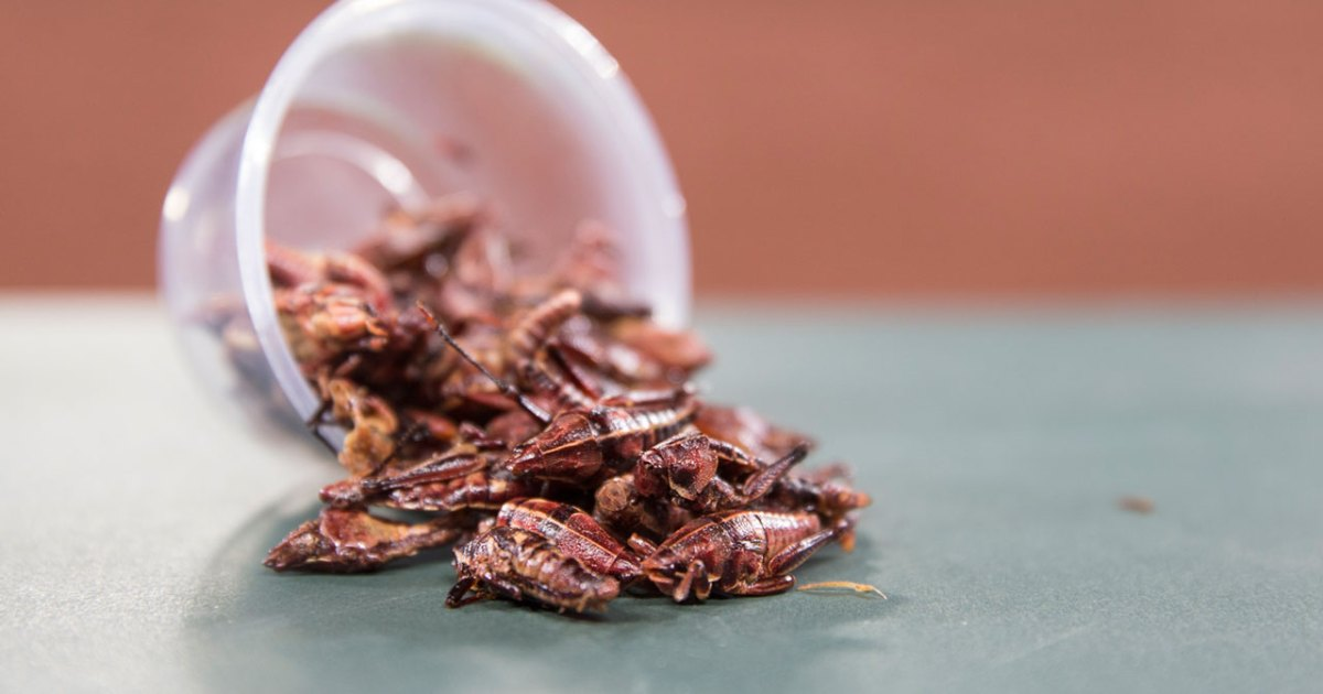 How The Seattle Mariners Turned Protein Packed Grasshoppers Into An