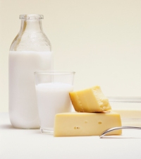 Milk Fat May Cause Bowel Diseases by Altering Gut Bacteria