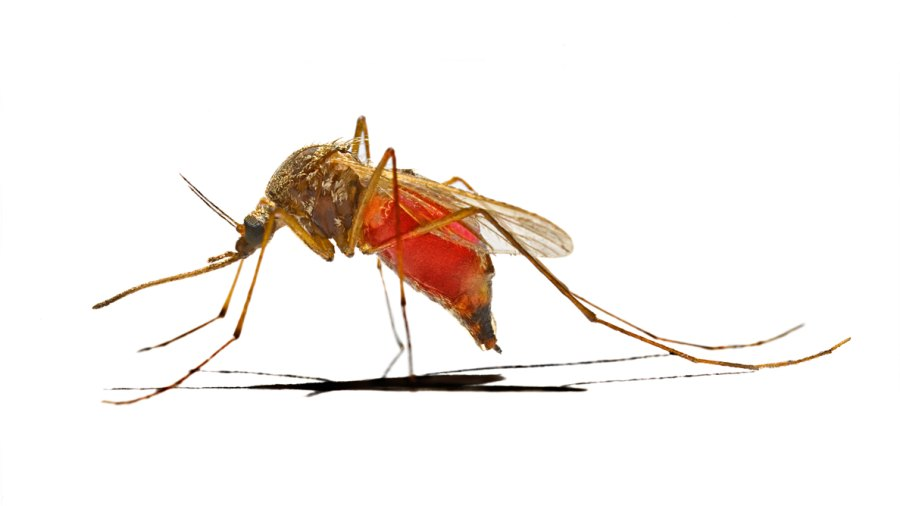 Should Fit Men Worry About the Zika Virus?
