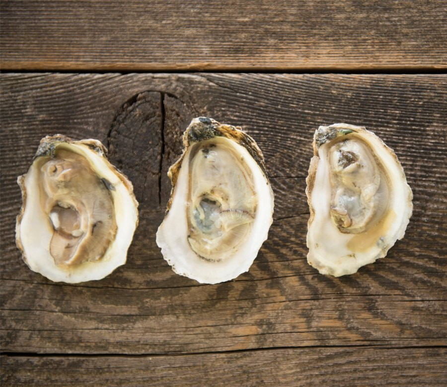 6. Oysters