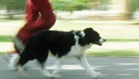 9 Tips for Running With Your Dog