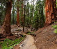 Sequoia and Kings Canyon, California