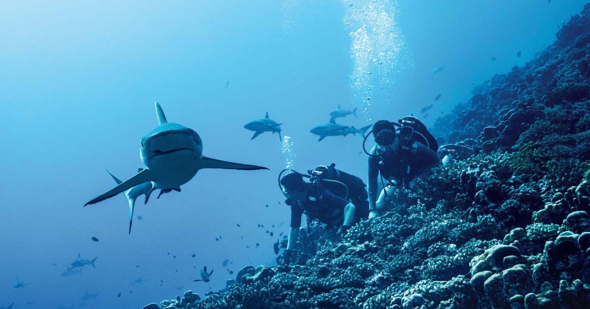 What Its Really Like To Swim In Shark Infested Waters