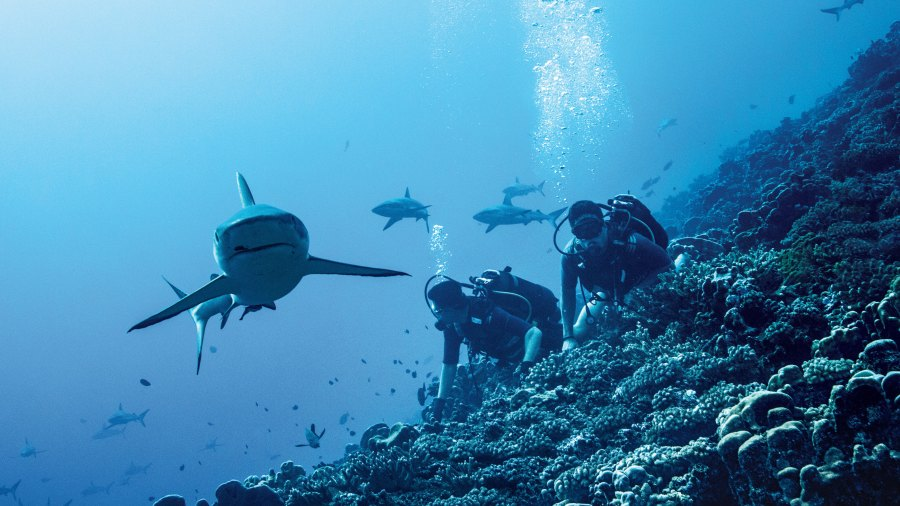 What It's Really Like to Swim in Shark-infested Waters