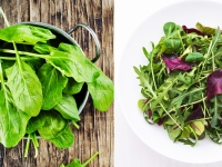 Spinach or mixed mesclun