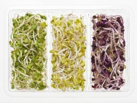 6. Bean sprouts