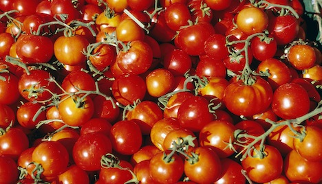 Fit Food: the Benefits of Tomatoes