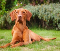 The Top 10 Most Active Dogs