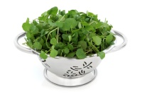Leafy Greens Minimize Damage Caused by Workouts