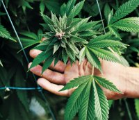 No Surprise: World's First Pot-Friendly Gym to Open in San Francisco