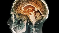 mj-390_294_12-facts-about-your-brain