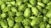 mj-390_294_20-things-you-didnt-know-about-hops