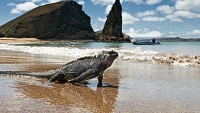 mj-390_294_a-bucket-list-guide-to-seeing-the-galapagos