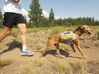 mj-390_294_a-workout-fit-for-the-dogs